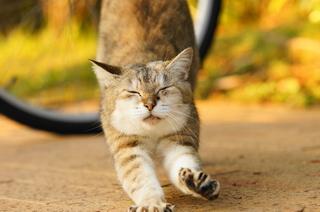 伸びをする猫.jpg